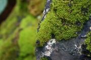 Mohás kő